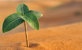 plant in sand